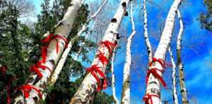 birch tree trunks with red ribbons and blue sky above